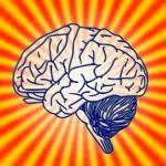 忘れる脳、忘れない脳。~記憶の仕組み~